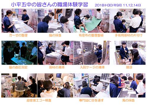 小平5中 職場体験学習  2018(H30)09 11 12 14