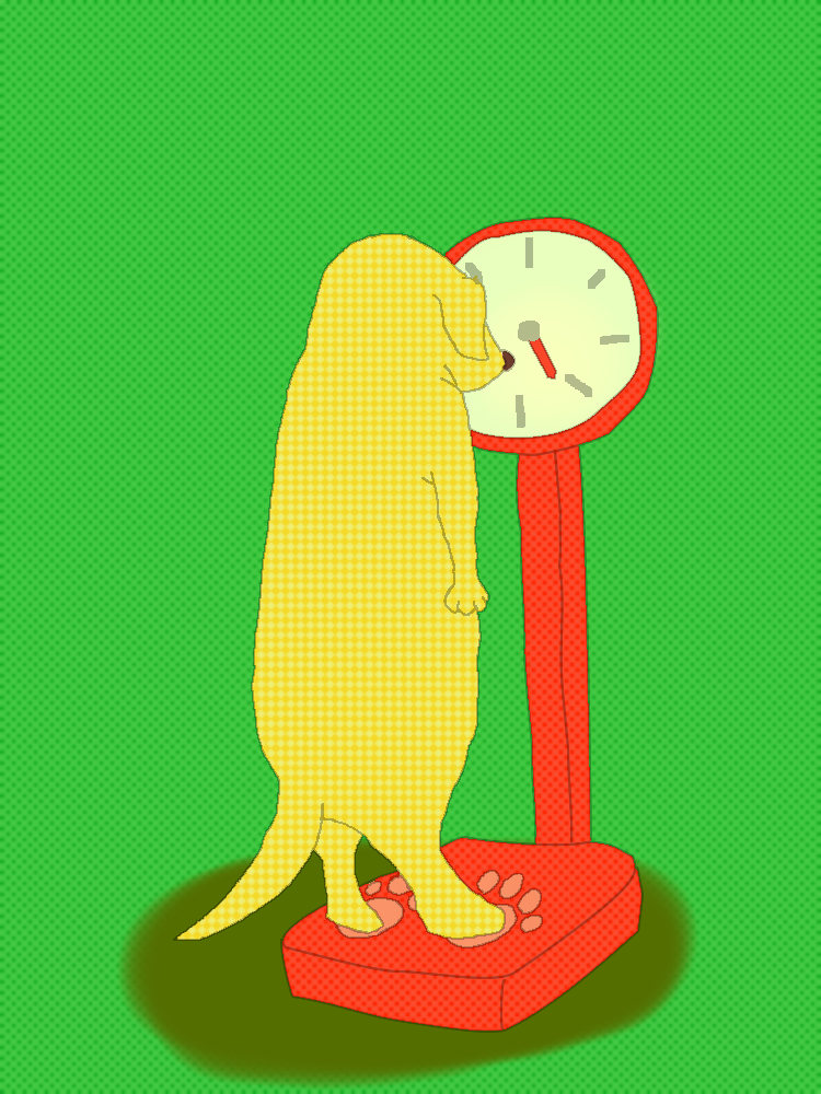 イメージ:肥満の引き金を引かれてしまい、自ら体重管理を心掛ける犬