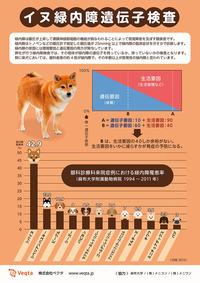 柴犬の緑内障罹患率は高い。