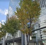 MF桜橋ビル2号線側