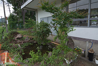 JR肥薩線、霧島温泉駅の池庭