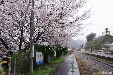 JR西日本・三江線、因原駅の桜