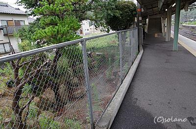 玖波駅ホームに残る枯池