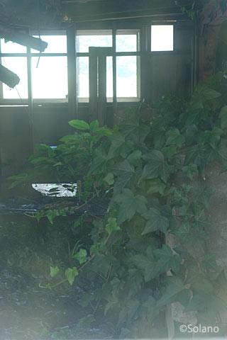 平成筑豊鉄道・崎山駅、草で埋め尽くされた1階部分。