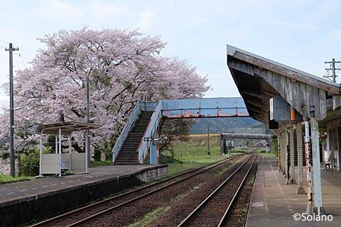 江崎駅、桜並木