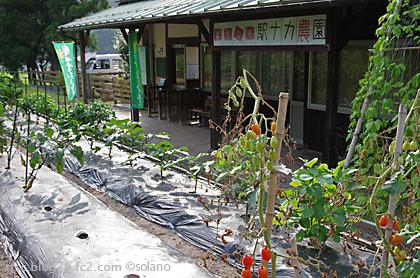 下久野駅、農園。