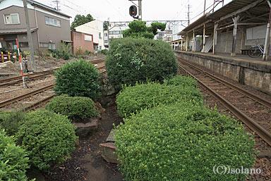 福井鉄道・神明駅の枯池