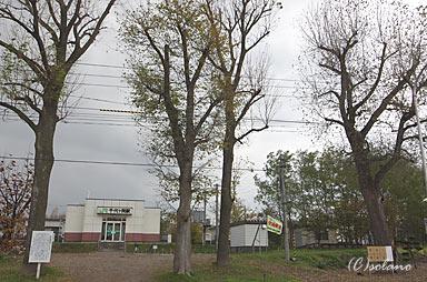 千代ヶ岡駅駅舎と4本の大木