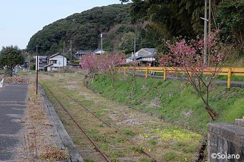 滝部駅、廃側線に植樹された桜