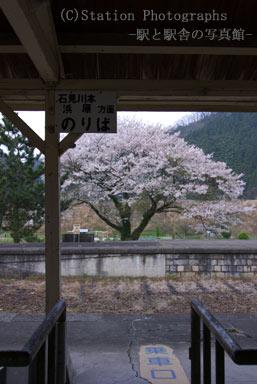 川戸駅・改札口と廃ホームの桜