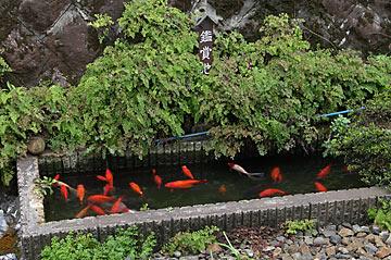 田端駅、鯉の泳ぐ池