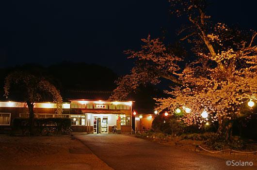 桜咲き誇る、川平駅の夜景(JR西日本・三江線)