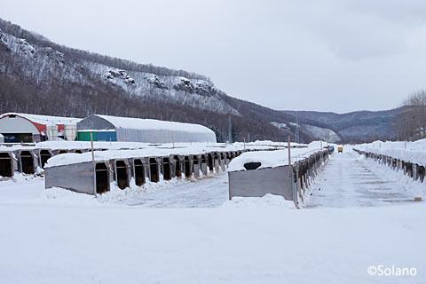 下白滝駅前の牧場、小さな子牛小屋が並ぶ