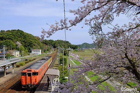 江崎駅、国鉄色40系気動車と桜