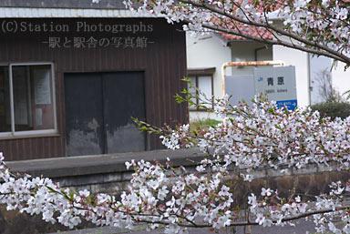 青原駅・駅名標と桜