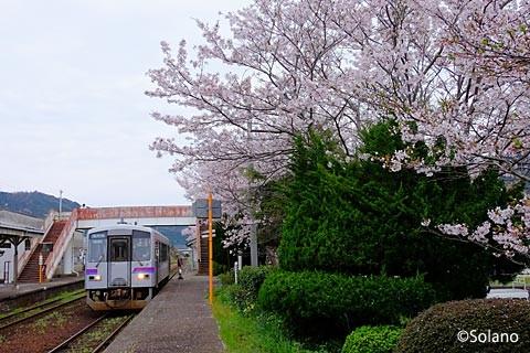 桜咲く萩駅に進入する列車