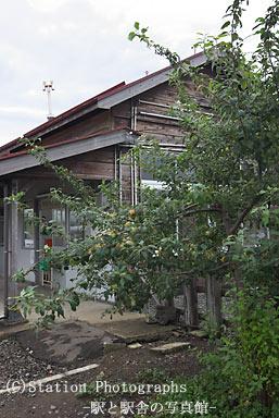 藤崎駅駅舎横のリンゴの木