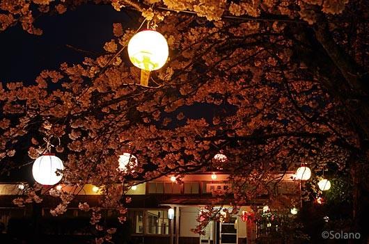 三江線・川平駅、駅舎周囲の桜に巡らされた提灯