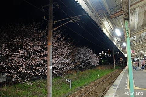 山陰本線の終点・幡生駅に咲く桜