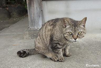 渡駅の猫駅長?