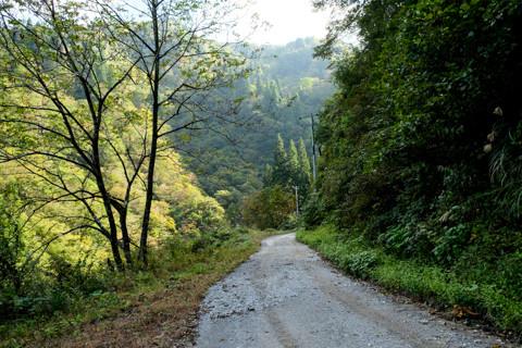 161020_04石川「下田原(旧白峰村)と林道」38
