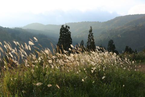 161020_05石川「林道白木峠線の白山の見える展望台」57