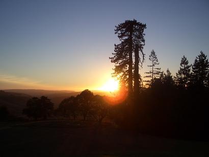 マザーツリーと夕日