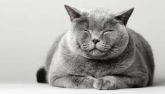 ネコに好かれるコツは「ゆっくりまばたきすること」だと研究者が実証