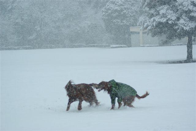 雪の光が丘 001