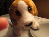 愛犬メルシー