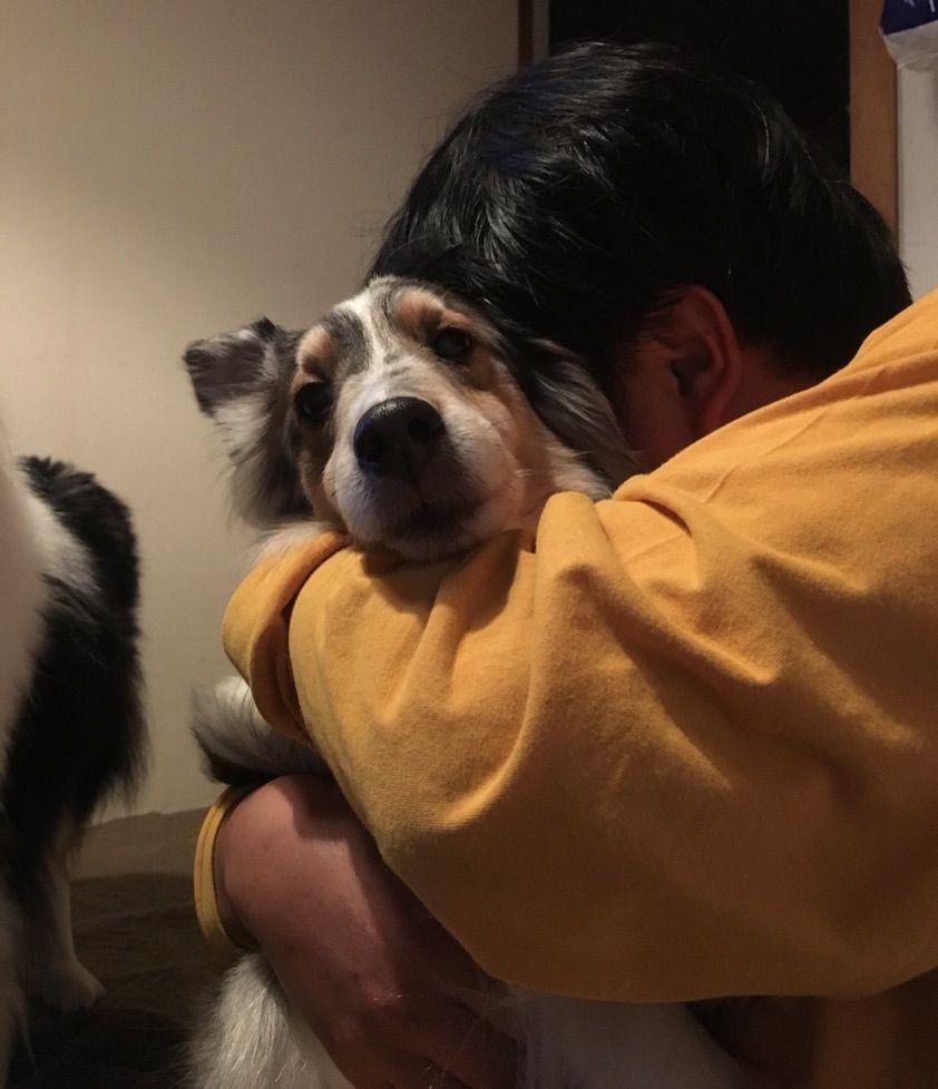 Resultado de imagen para australian shepherd 犬 抱きしめる