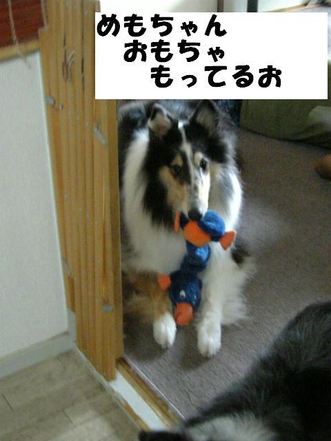 おもちゃもってるお
