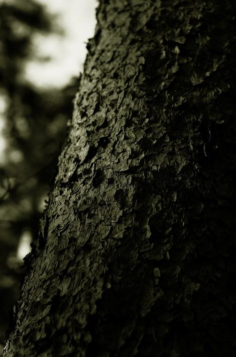 20180317 樹皮-鱗2