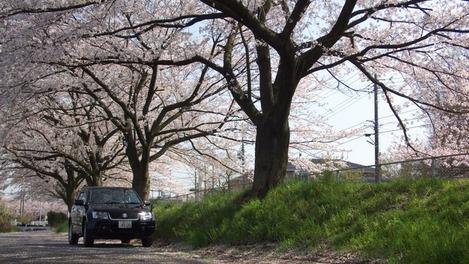 20120412 桜とエスクード-1