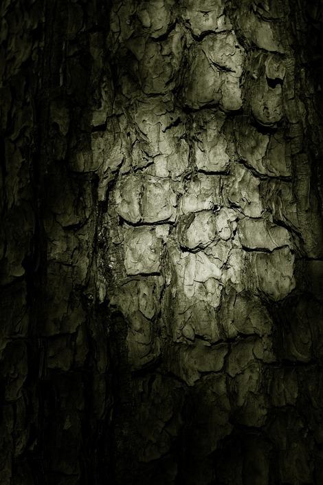 20180317 樹皮-鱗1