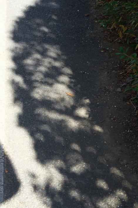 20190106 部分日食の影1
