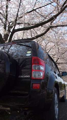 20120412 桜とエスクード-3