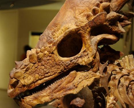 20131104 恐竜