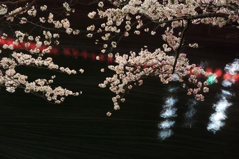 20180327 目黒川4