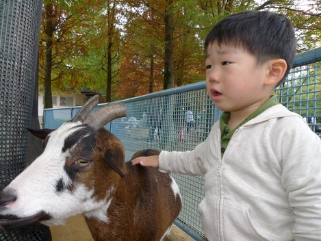 20091101 動物園