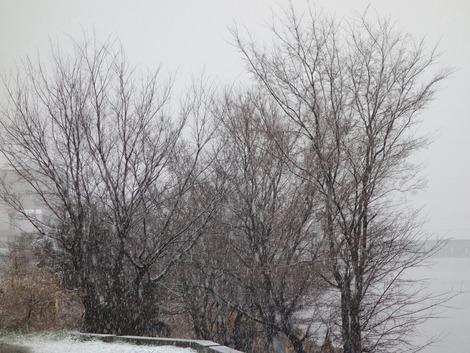 20150130 雪景色