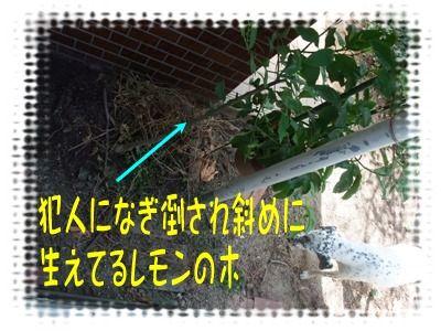 blog2010_09190004