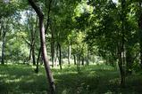皇居雑木林