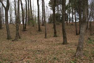雑木林にも春がきた