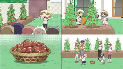 ひだまりスケッチほしみっつ12話 トマト収穫