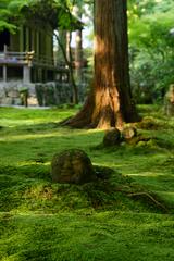池泉回遊式庭園