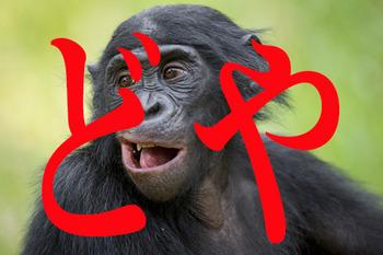 チンパンジー-寿命