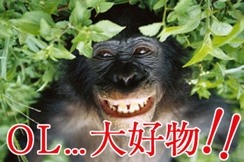 bonobo-30