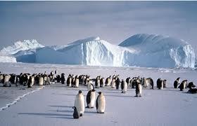 ペンギンの大集団