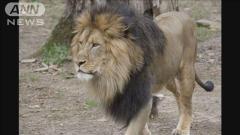 米動物園 園内全てのライオン・トラがコロナ感染